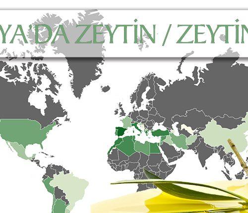 dunyada-zeytin-zeytinyagi